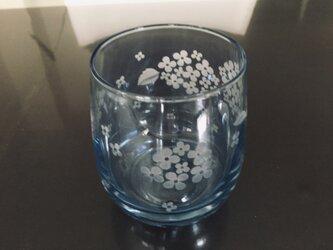 紫陽花(オーロラグラス)の画像