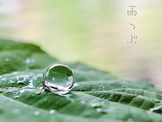 雨粒 ネジバネ式イヤリングの画像
