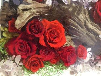 置き型フレーム 流木と赤薔薇の画像