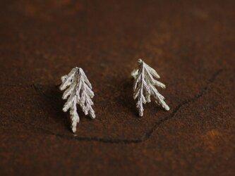 糸杉のピアス(ダブル)の画像