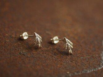糸杉のピアス(スモール)の画像