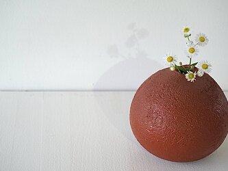朱一輪花生の画像