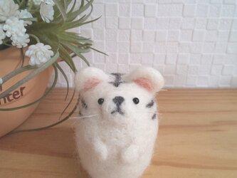 つぶらな瞳のホワイトタイガーさん 羊毛フェルトの画像