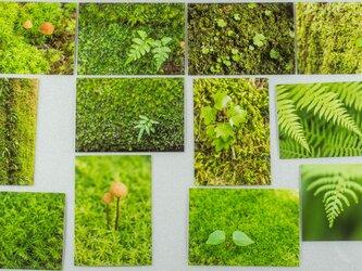 Lサイズの写真・植物の緑のクローズアップ12枚セット(L021N)の画像