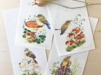 【一筆箋】木の実きのまま-野鳥ヒタキ類の画像