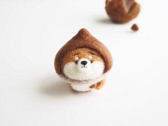 【受注製作】なりきり栗のまゆ柴犬~ふわふわイガに包まれて~ 羊毛フェルトの画像