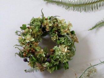 [再販]柏葉紫陽花とアナベルのちいさなリースの画像