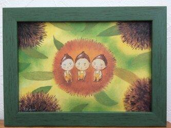 くり三兄弟の画像