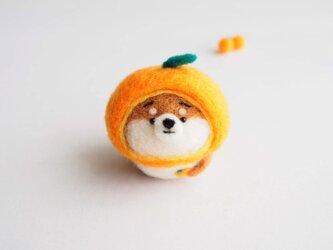 【受注製作】なりきりみかんのまゆ柴犬(赤柴・黒柴・白柴)  羊毛フェルト(アクレーヌ)の画像