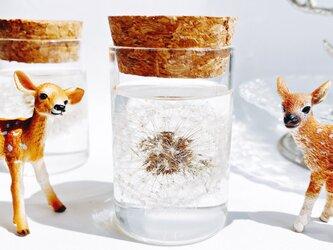 たんぽぽ綿毛のガラス瓶標本 植物標本 枯れない花の画像