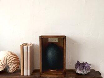 エミューの卵標本その二十一。の画像