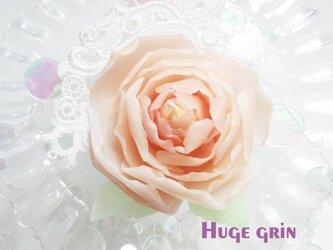 満開のピンクシャクヤクの画像