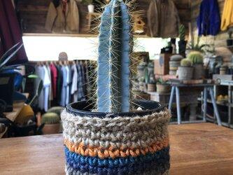 natural cactusの画像