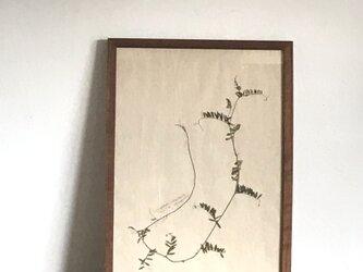 【身近な植物標本】ナヨクサフジの画像
