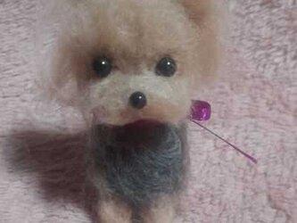 羊毛フェルトハンドメイドヨーキーの画像