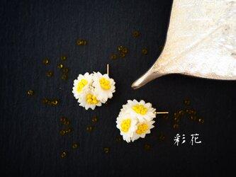 小花ピアス 白の花びらの画像