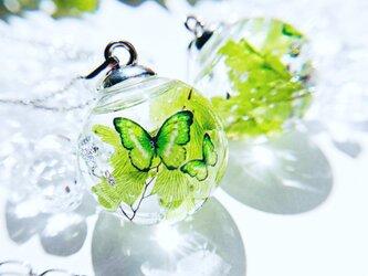 muscat 蝶とリーフのガラスドーム   ピアス/イヤリング 秋の画像