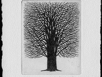 一本の樹/ 銅版画(作品のみ)の画像
