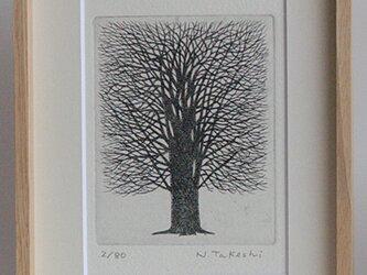 一本の樹/ 銅版画(額あり)の画像