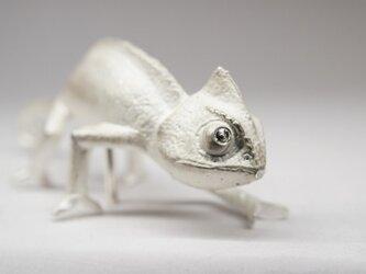 chameleon pinsの画像