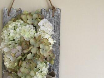 autumn hydrangeaの画像