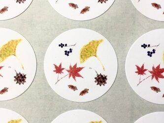 紅葉と木の実のシールの画像