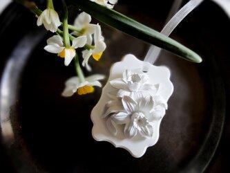 白い博物館 ■ アロマストーン ■ 植物標本 ラッパスイセンの画像