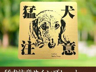 【送料無料】猛犬注意サインプレート(ダックスフンド)GOLDアクリルプレートの画像
