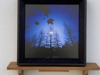 白夜の樹々の画像