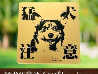 【送料無料】猛犬注意サインプレート(コーギー)GOLDアクリルプレートの画像