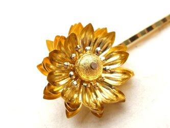 ヘアピン ゴールドの菊の画像