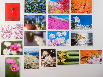 Lサイズの写真・花と風景その2・色々17枚セット(L016-2)の画像