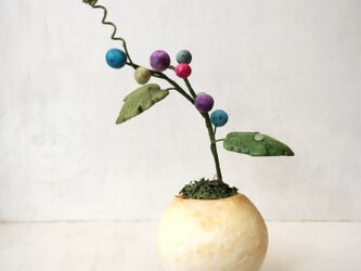 5116.bud 粘土の鉢植え ノブドウの画像