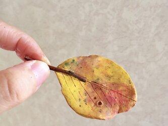 5117.bud 落ち葉の画像