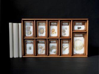 化石標本セット横長その一。の画像