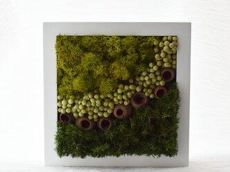 商品番号701「-森-」プリザーブドアートフレームの画像