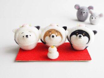 【受注製作】2021年干支(丑) なりきりうし(牛)のまゆ柴犬(赤柴・黒柴・白柴)正月飾り3匹セット 羊毛フェルトの画像