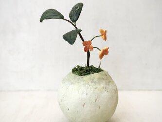 5122.bud 粘土の鉢植え キンモクセイの画像