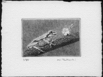 樹の上の蛙/銅版画 (作品のみ)の画像