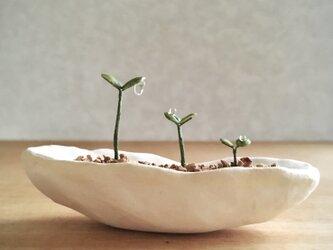 5125.bud 粘土の鉢植え 背の順の画像
