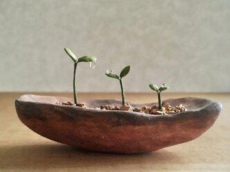 5126.bud 粘土の鉢植え 背の順の画像