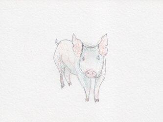ポストカード <Piggy buu> 2枚セットの画像