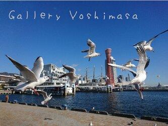 みなと神戸に咲く華 「ユリカモメ」 「カモメのいる暮らし」 A3サイズ光沢写真横  写真のみ 神戸風景写真の画像