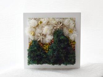 商品番号710「大きな木」プリザーブドアートフレームの画像
