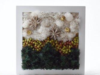 商品番号715「星に願いを」プリザーブドアートフレームの画像