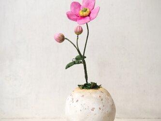 5150.bud 粘土の鉢植え シュウメイギクの画像