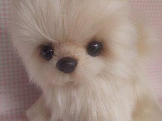ふわふわぬいぐるみ☆ポメラニアン☆クリームの画像