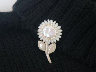 真珠の小菊の画像