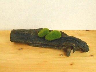 【温泉流木】黒い流木のリバーシブルな台座 台座 置台 流木インテリアの画像