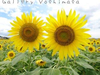 笑顔「ひまわり」「花のある暮らし」A3サイズ光沢写真横 写真のみ 風景写真 花写真の画像